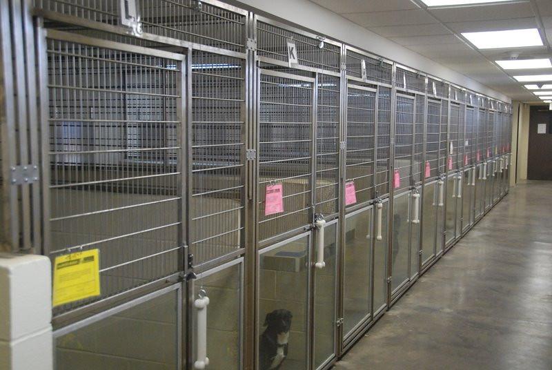 Kentucky Humane Society 2010 028.jpg