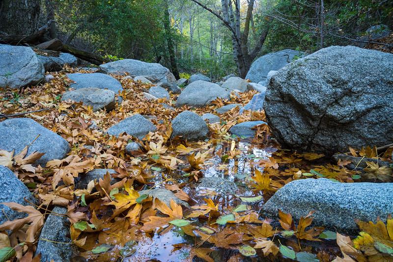 San_Bernardino_Mountains_Fall_Color_Trees_Seely_3400.jpg