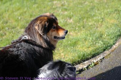20120331 Dog Walking
