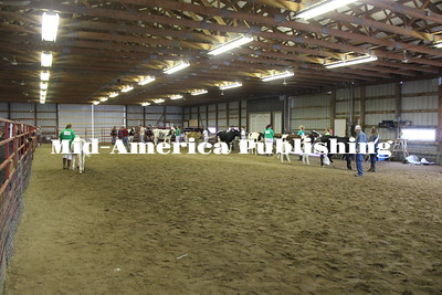 Fair Dairy Cattle Show