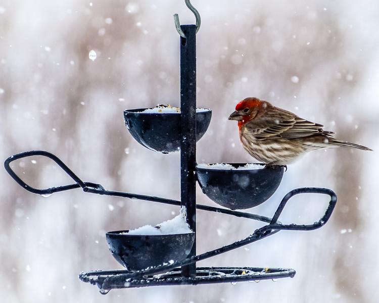 Color-Bird