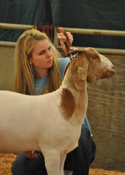 Kansas Junior Livestock Show 2013