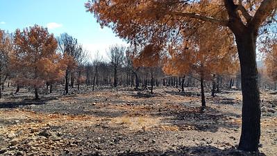 Granadella Fire 2016
