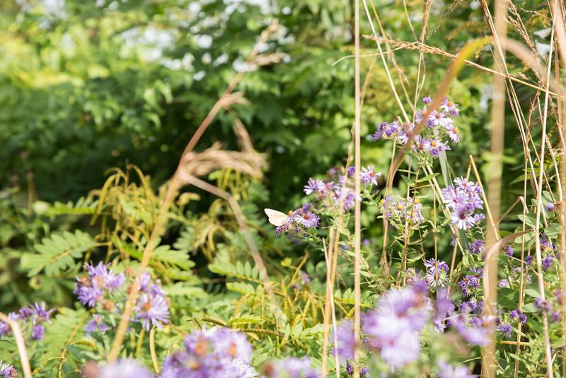 Chicago Botanic Garden 011.jpg