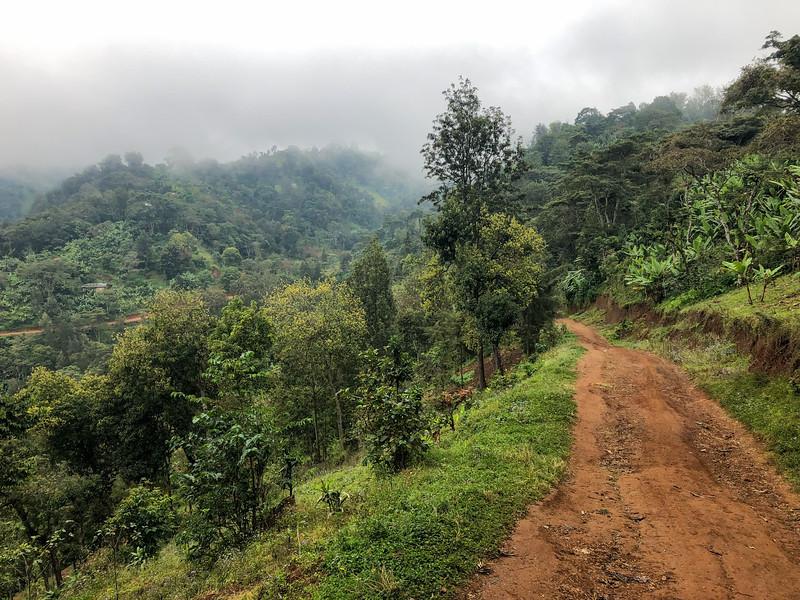 Hiking near Moshi, Tanzania