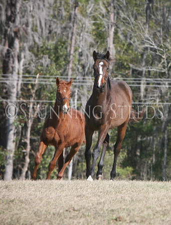 Youngsters & Mares