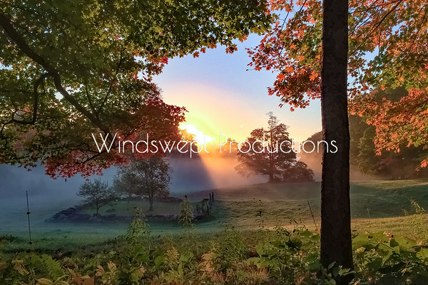Windswept Scapes