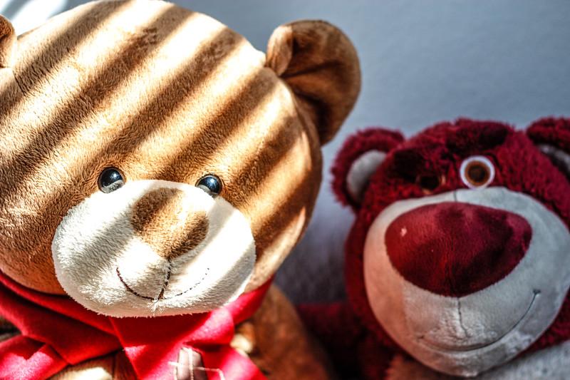 130804, Bear - LPF.jpg