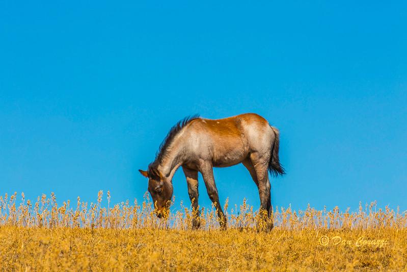 Lone colt 4-112.jpg