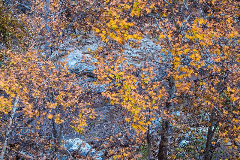 Sierra_Pelona_Mountains_Fall_Color_Southern_California_MG_7692.jpg