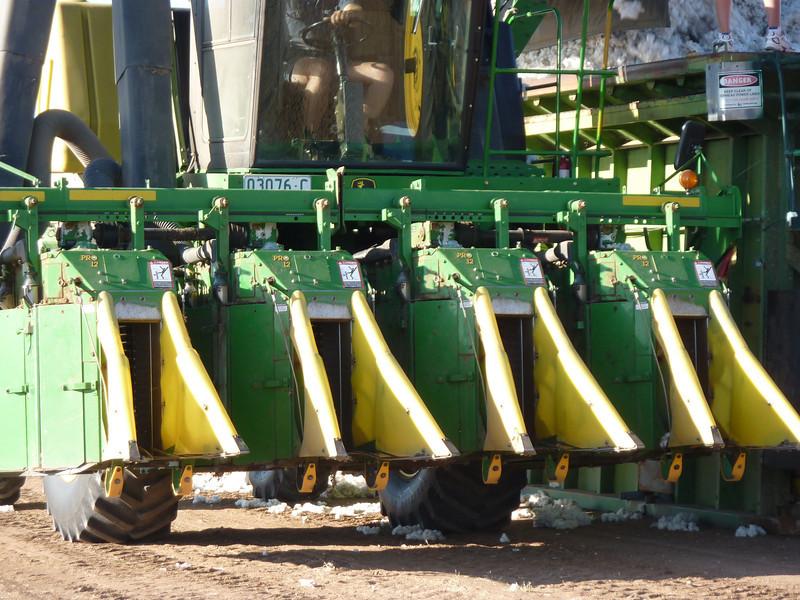 Cotton picking 5