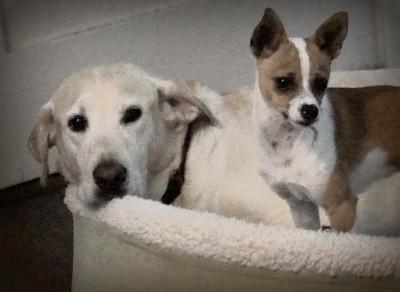 Tiki, Toumo and Auggie