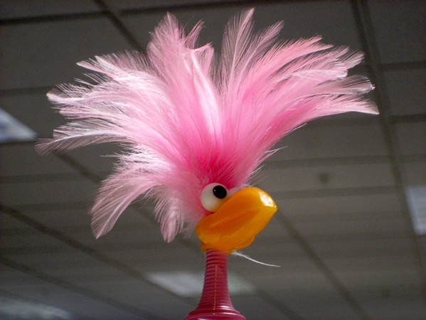 0316 feather.JPG