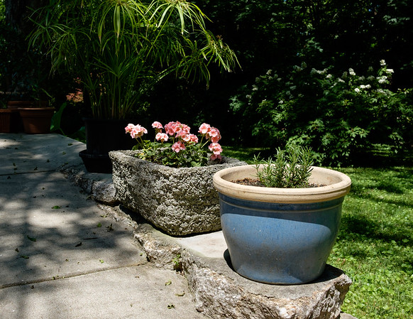 Cats and Garden - July 2021