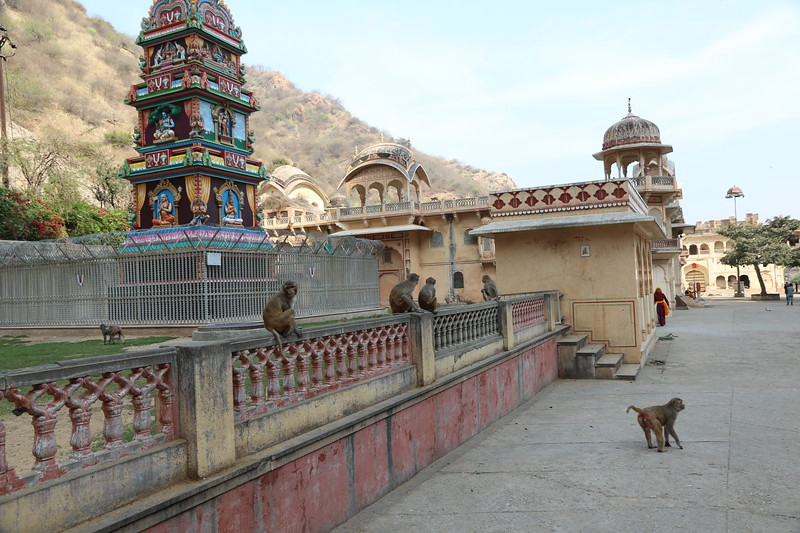 Galta Ji is a large Hindu temple complex just east of Jaipur that has become home to a large colony of monkeys.