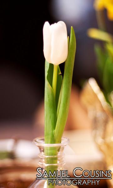 A single white tulip in a vase