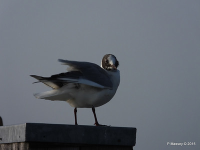 Other Birds Around Southampton Water