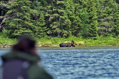 2021 Moose Safari