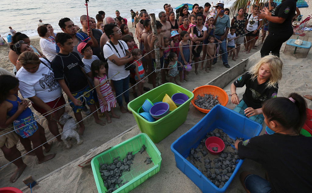 ". In this Saturday, Dec. 2, 2017 photo, volunteers put individual olive ridley sea sea turtle hatchlings into small buckets, to give to people wishing to help with their release to the sea in Sayulita, Nayarit state, Mexico. A local non-profit organization ""Red Tortuguera\"" is helping the turtles survive by relocating recently laid eggs to a protected area of the beach, collecting the hatchlings to keep them safe from bird attacks, and releasing them as a group every Saturday at sunset. (AP Photo/Marco Ugarte)"