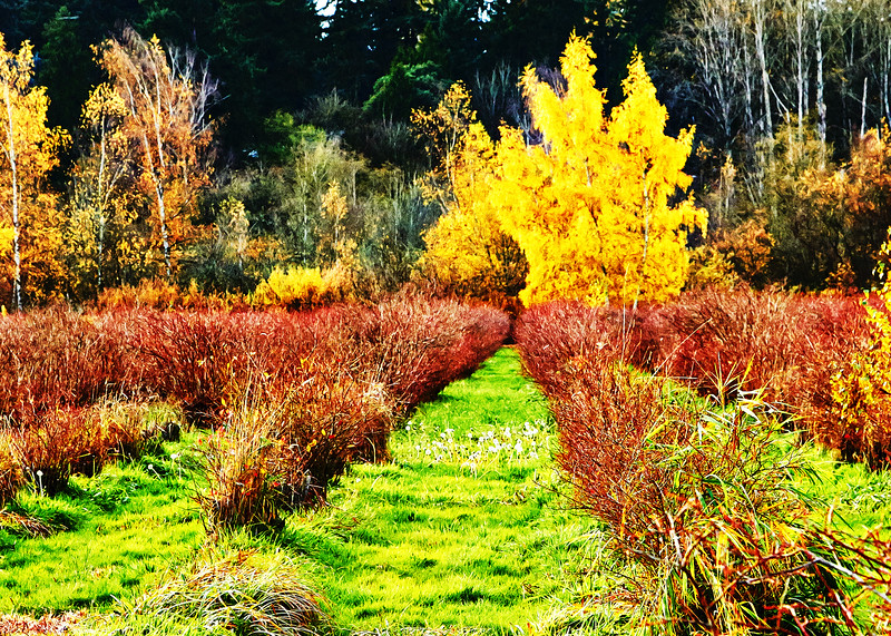 bellevue-park-bellevue-park-IMG_1419_.jpg