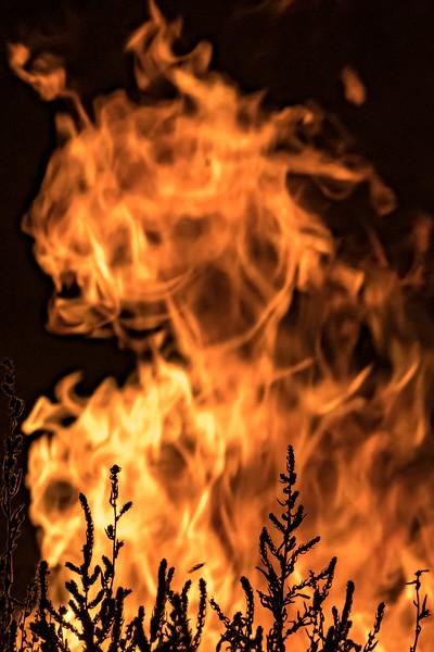20190817 Campfire-21.jpg