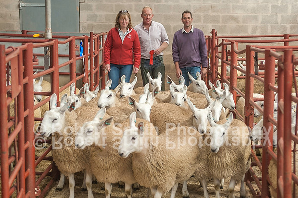 Longtown Mart Cheviot Mule Sale August 25th 2015