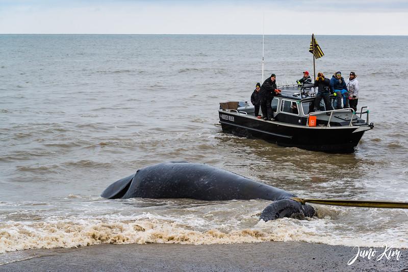Utqiagvik Whaling-6104338-Juno Kim.jpg