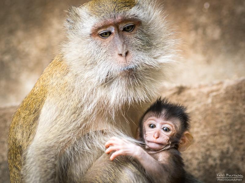 2017-12-22 Monkeys-5.jpg