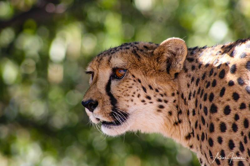 Wildlife in Namibia