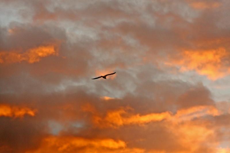 Sunset Las Gallinas