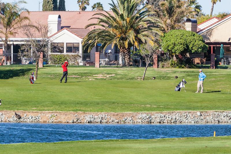 Golf-1180.jpg