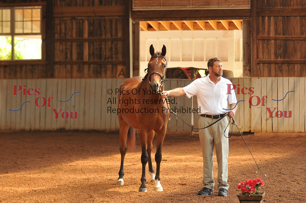 American Warmblood Society (AWS) Inspection at Willow Hill 8-20-10