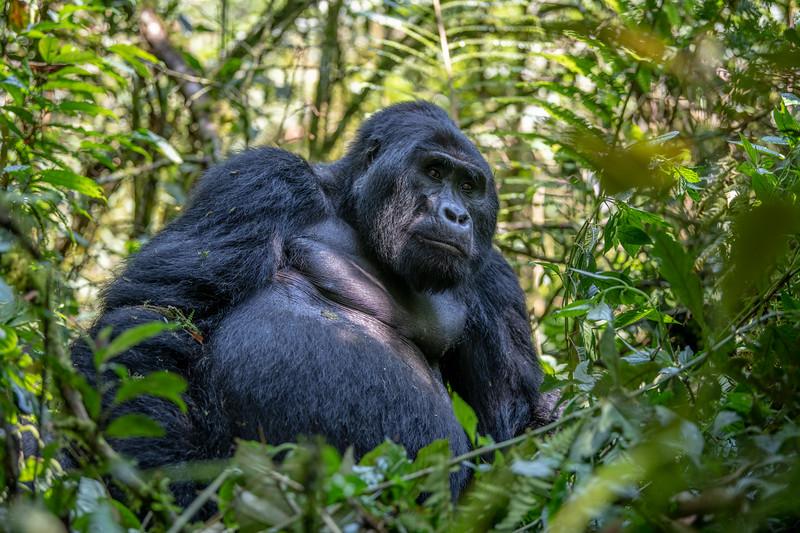 Uganda_T_Gor-518.jpg