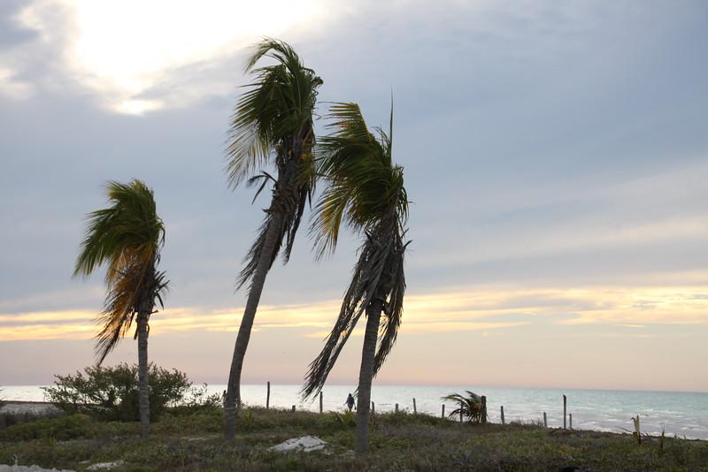 Holbox Island, Mexico  Feb2016 122.JPG