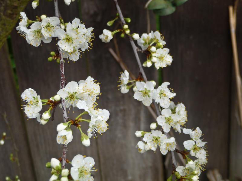 spring flowers-1000735.jpg