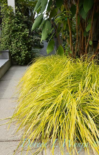 Lisa Bauer - designer's garden_1268.jpg