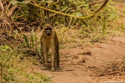 Wildlife of The Gambia