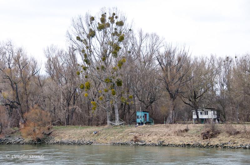 Rustic fishing cabins along the Danube, mistletoe in the tree