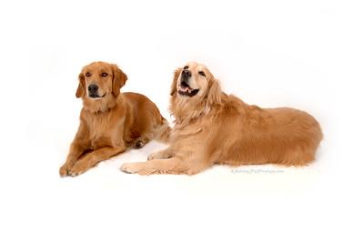 2 Golden Retrievers