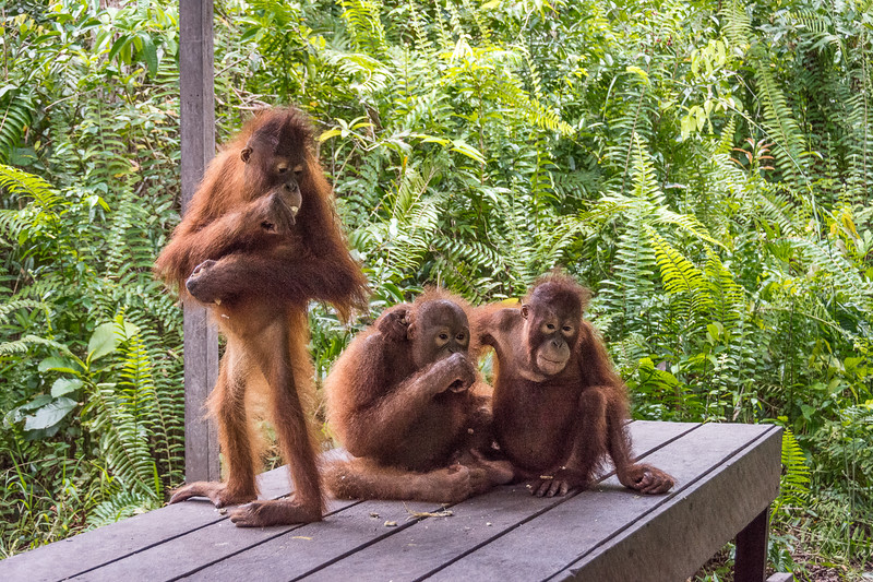 Borneo-2243-2.jpg