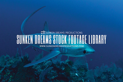 Sunken Dreams Stock Footage Library