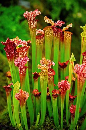 Plant & Flower Photo Shop