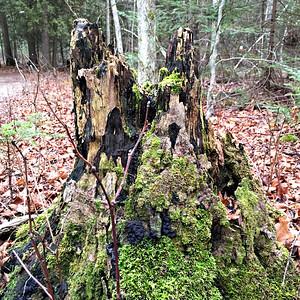 2015 12 26:  Newport State Park, WI, US, Flora