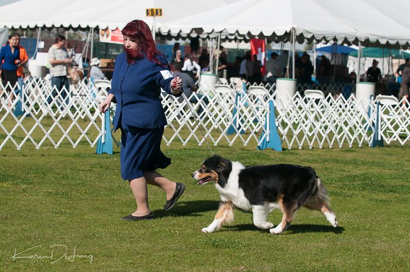 20170205_Australian Shepherds_Lost Dutchman Kennel Club-101.jpg