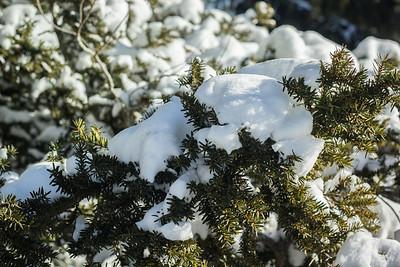 Arboretum in the Snow