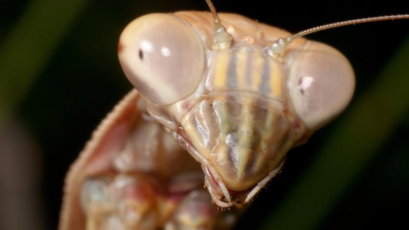 Mantis Desktop 9138.jpg