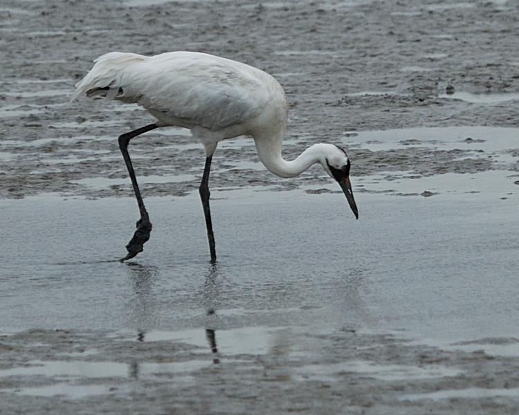 Aransas Wildlife Refuge 012009_0124.jpg