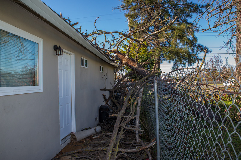 5671 Wallace Ave - Tree 1030am 12 16 2017 Extremly Windy Conditions-58.jpg