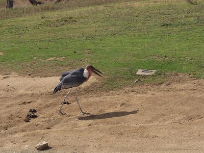 san Diego Wild Animal Park Again