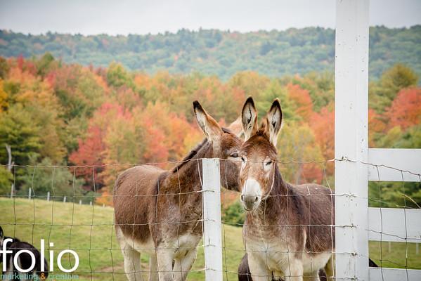 Maine Fall Farms